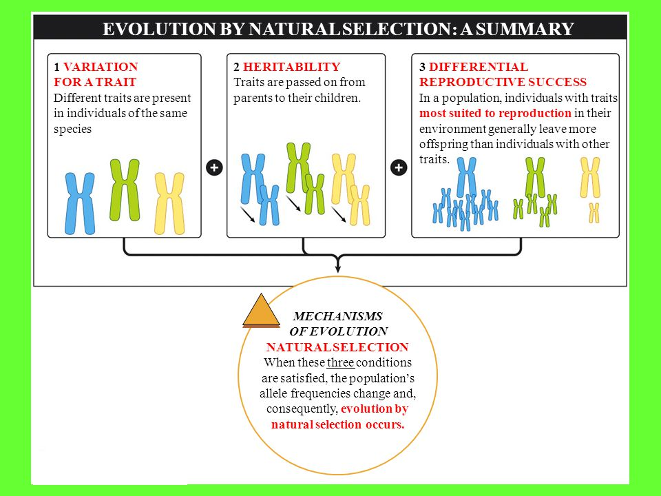 EVOLUTION BY NATURAL SELECTION: A SUMMARY