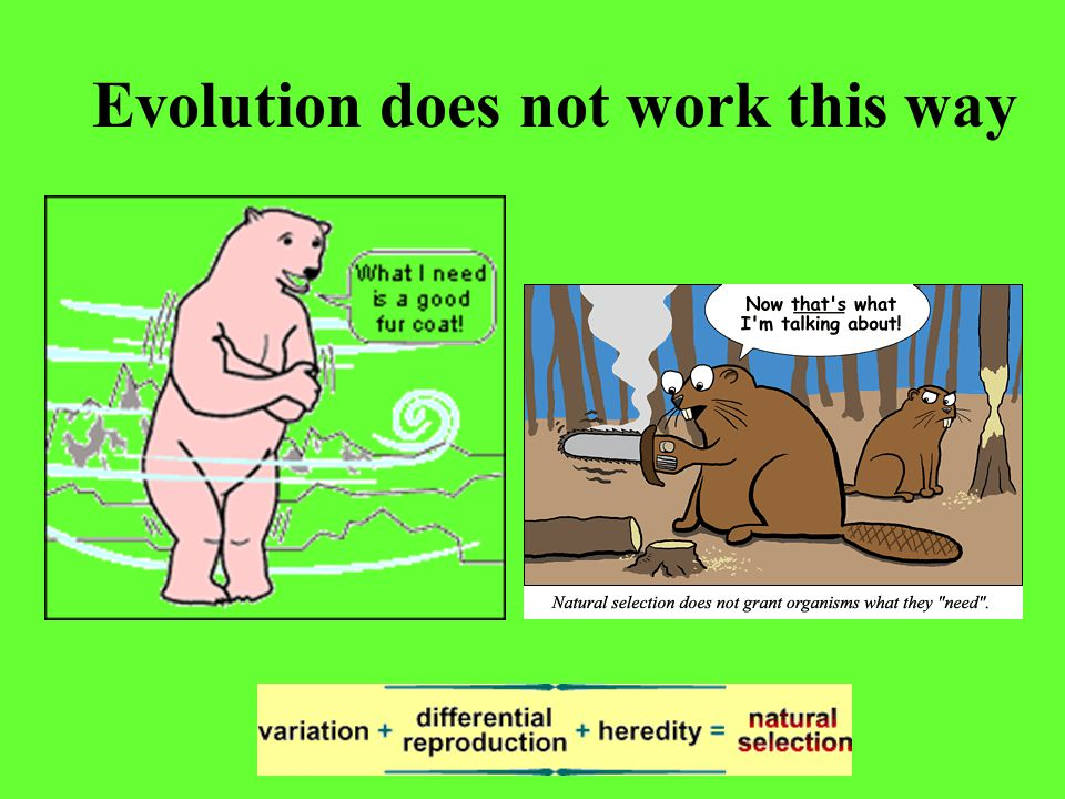 Evolution does not work this way