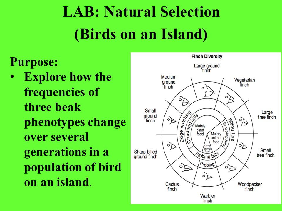 lab 1 natural selection evolution 1) the laboratory is designed to reinforce the often abstract lecture concepts   44-80 darwin, 1859, chapters titled natural selection and recapitulation and .