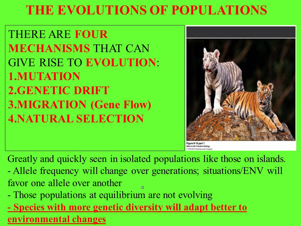 THE EVOLUTIONS OF POPULATIONS