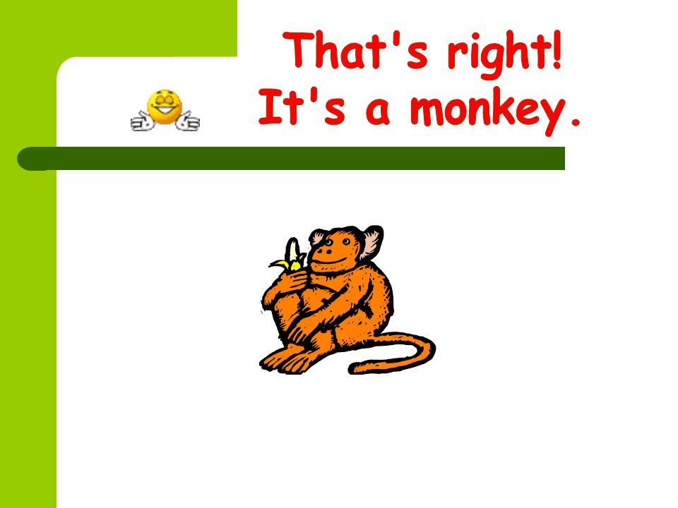 That s right! It s a monkey.