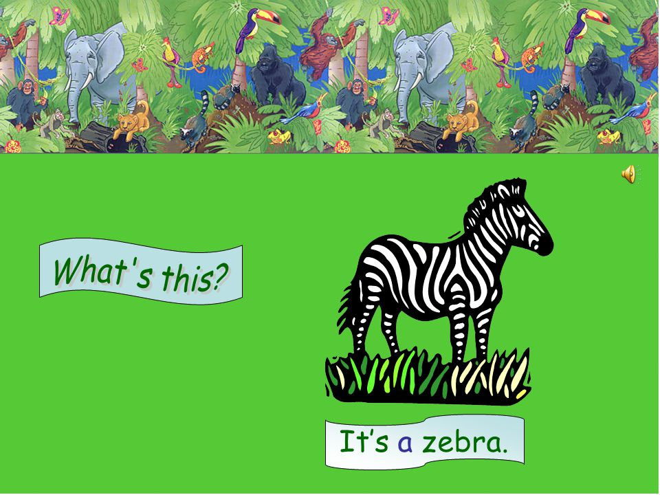 What s this It's a zebra.
