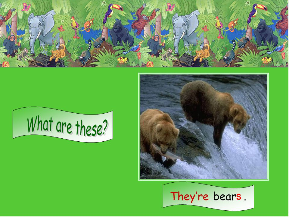 What are these They're bear . S