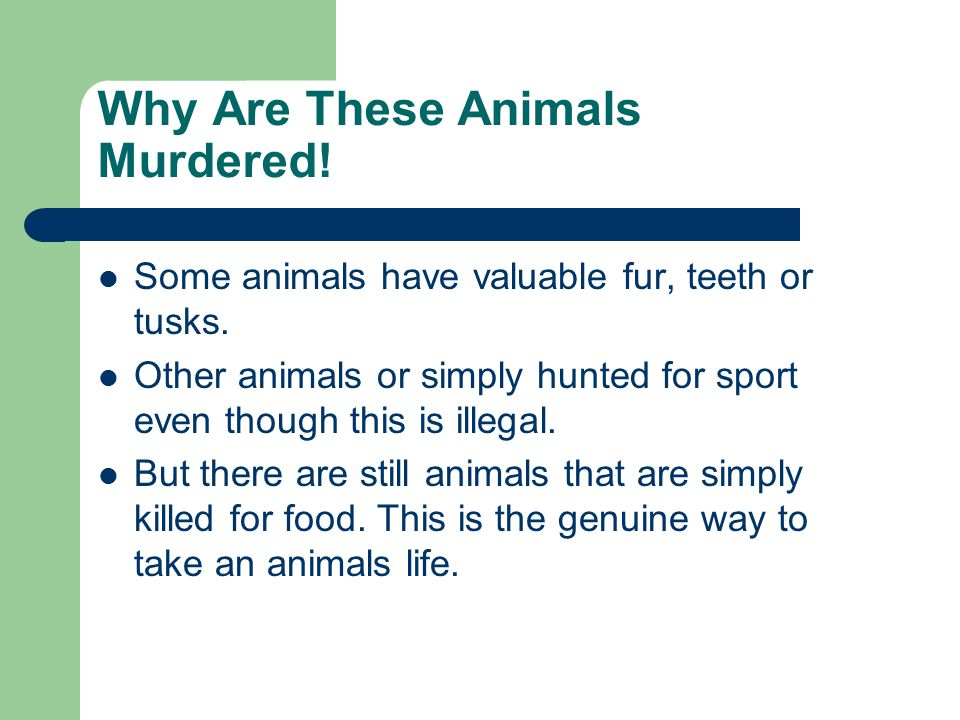 Why Are These Animals Murdered!