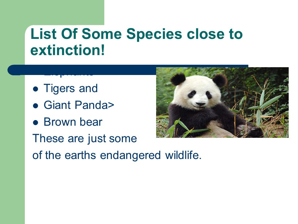 List Of Some Species close to extinction!