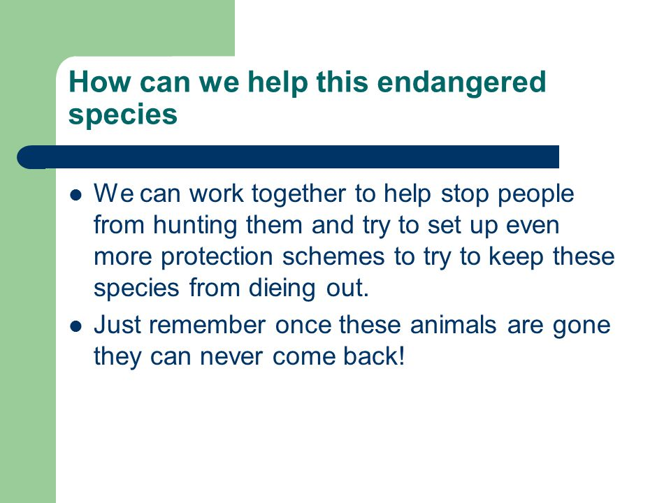 How can we help this endangered species