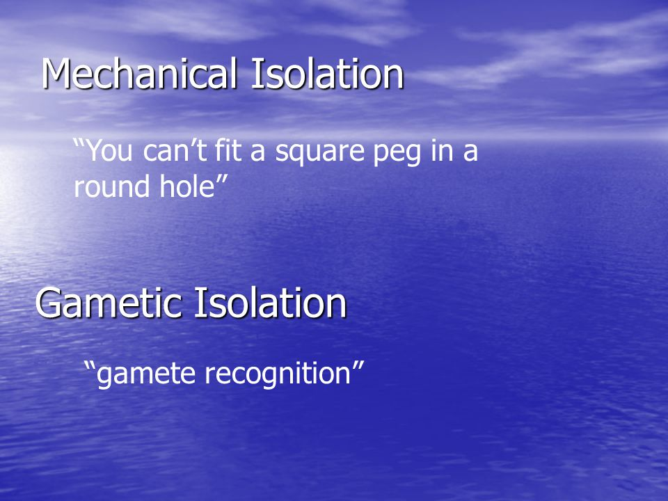 Mechanical Isolation Gametic Isolation