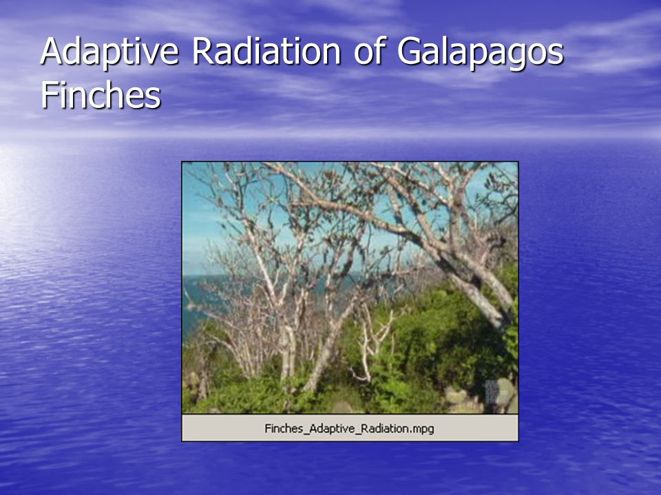 Adaptive Radiation of Galapagos Finches