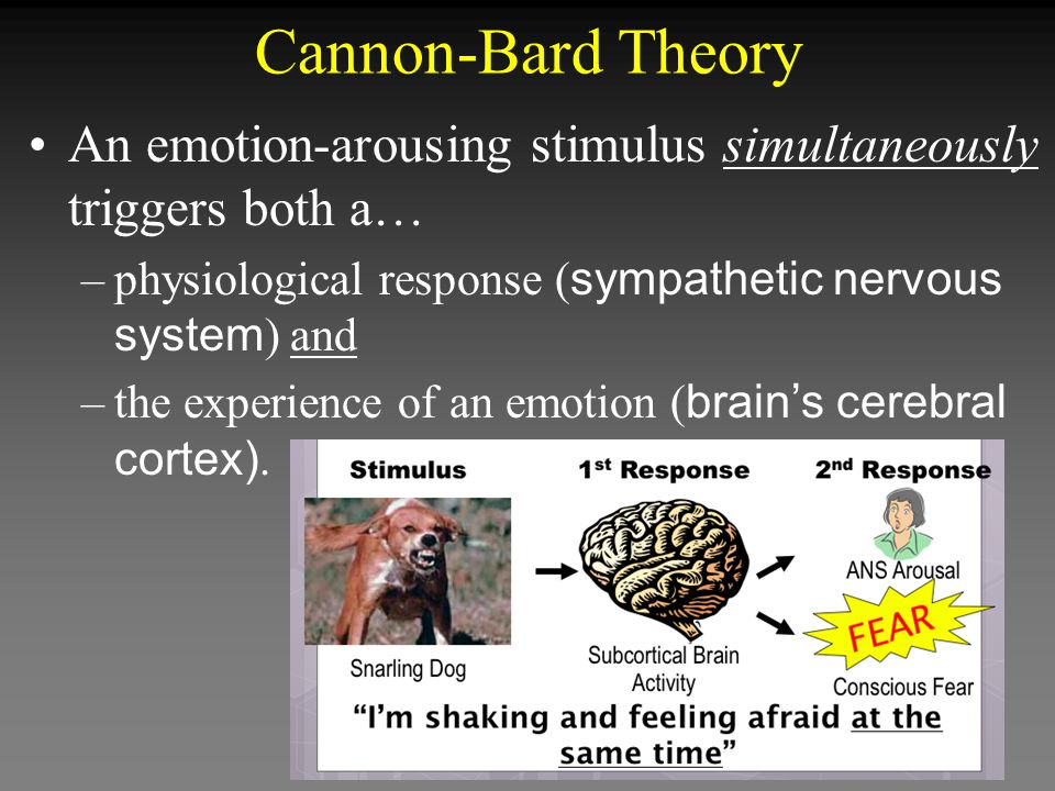 Cannon-Bard Theory An emotion-arousing stimulus simultaneously triggers both a… physiological response (sympathetic nervous system) and.