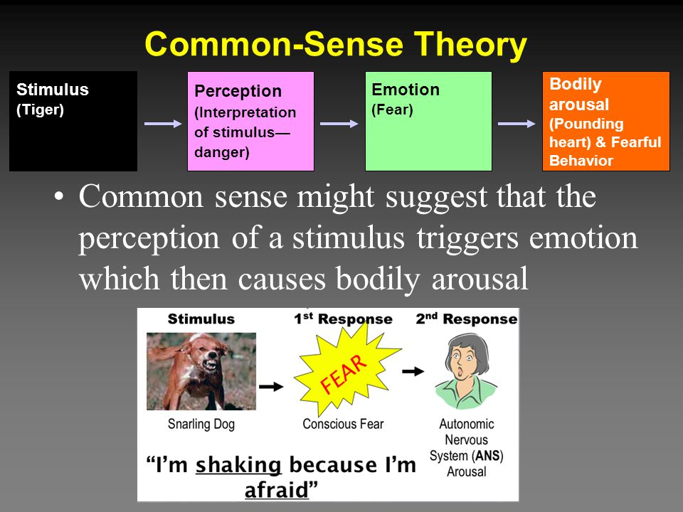 Common-Sense Theory Perception. (Interpretation. of stimulus— danger) Stimulus. (Tiger) Emotion.