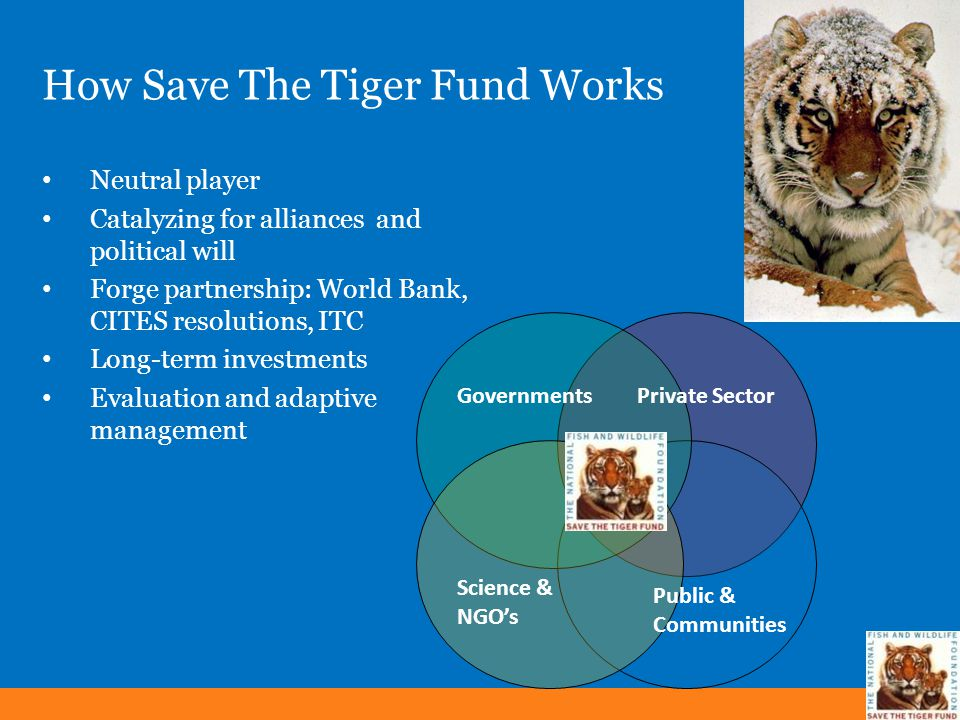 How Save The Tiger Fund Works