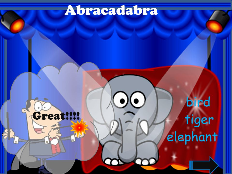 Abracadabra Great!!!! bird tiger elephant