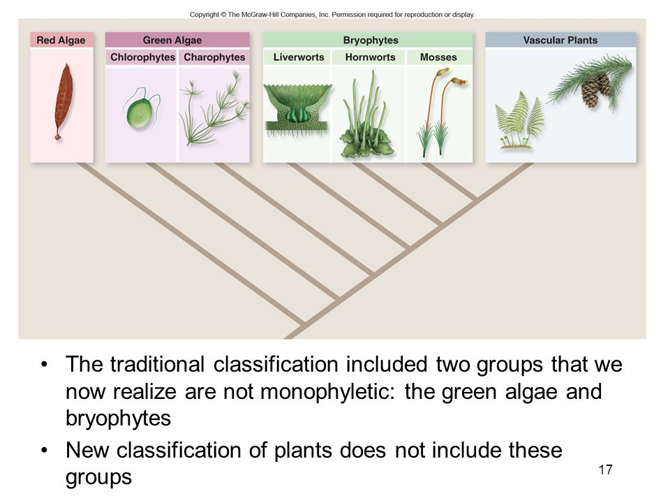 The traditional classification included two groups that we now realize are not monophyletic: the green algae and bryophytes