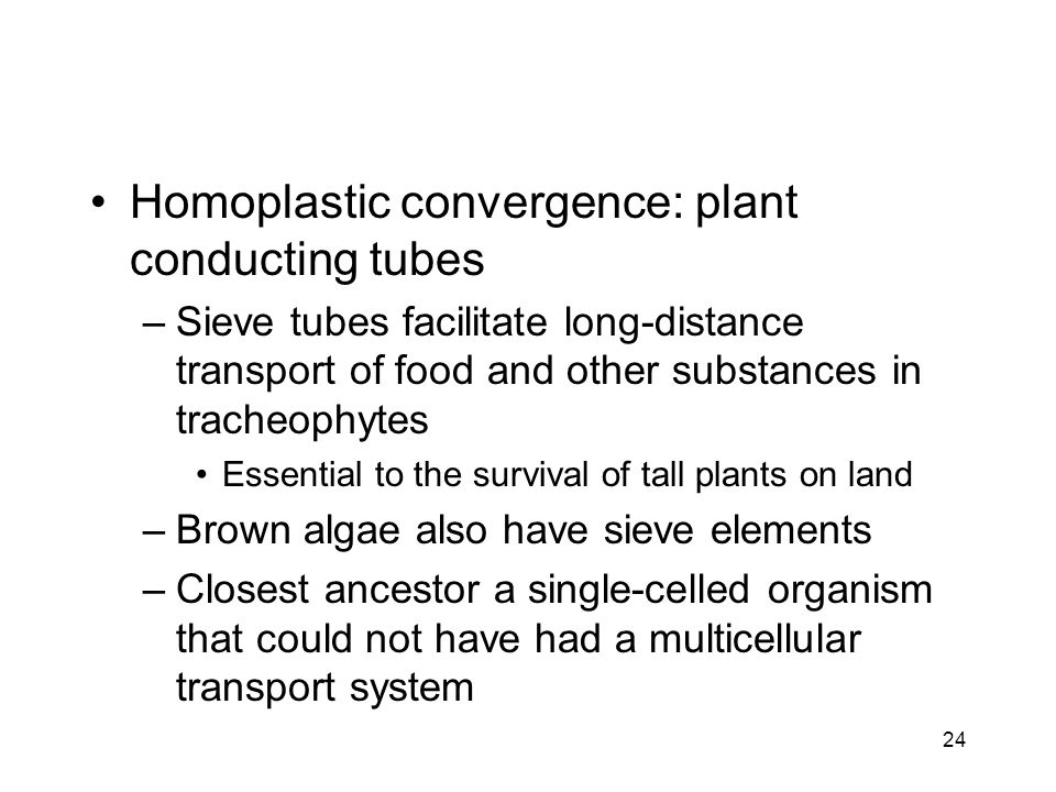 Homoplastic convergence: plant conducting tubes