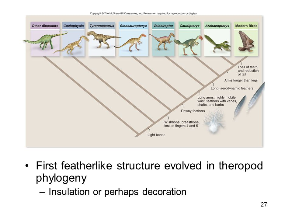 First featherlike structure evolved in theropod phylogeny
