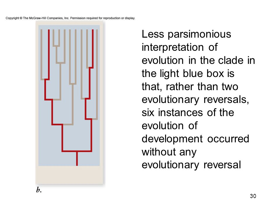 Less parsimonious interpretation of evolution in the clade in the light blue box is that, rather than two evolutionary reversals, six instances of the evolution of development occurred without any evolutionary reversal