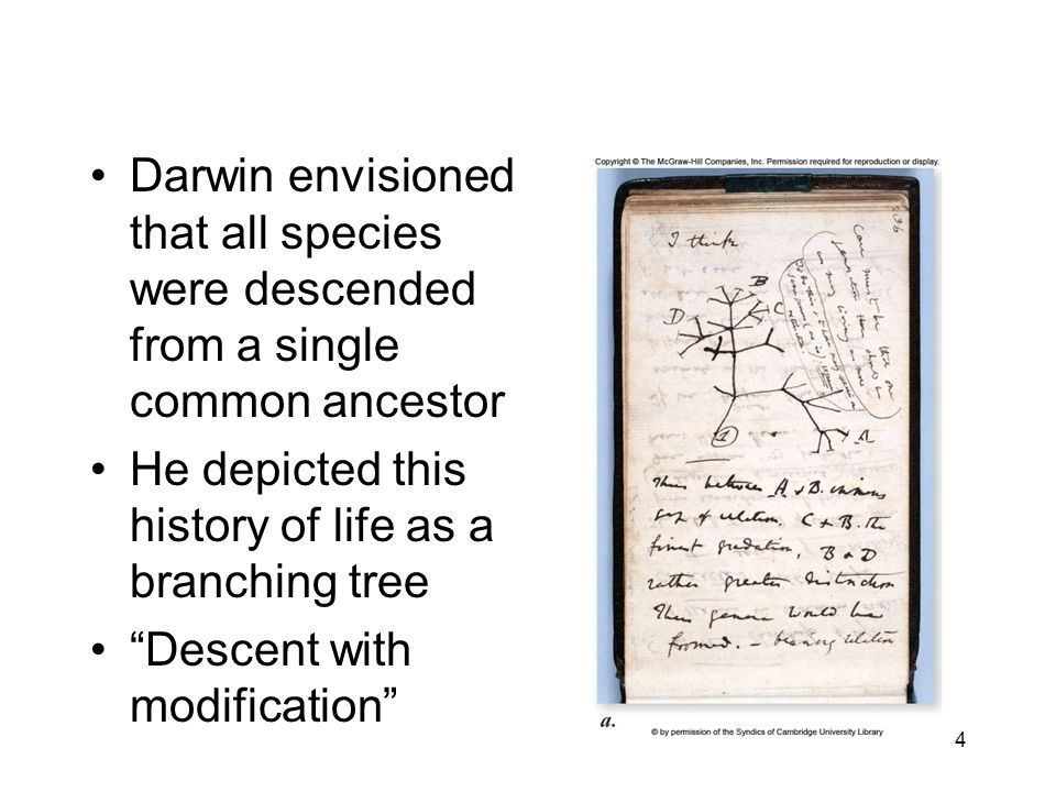 Darwin envisioned that all species were descended from a single common ancestor