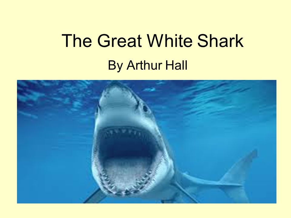 The Great White Shark By Arthur Hall