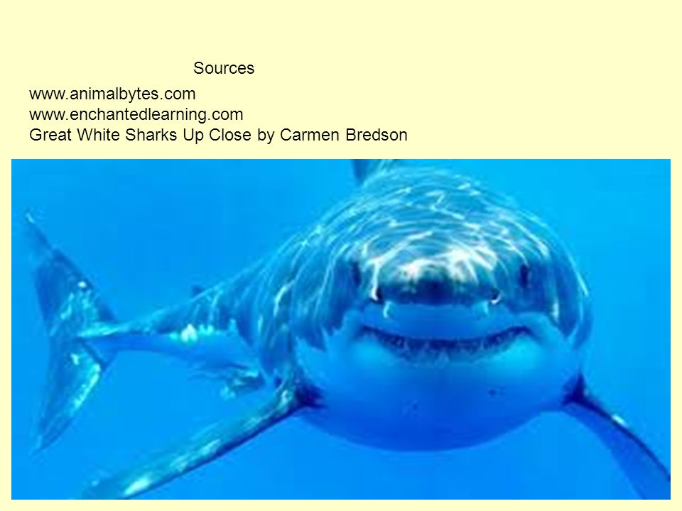 Sources www.animalbytes.com www.enchantedlearning.com Great White Sharks Up Close by Carmen Bredson