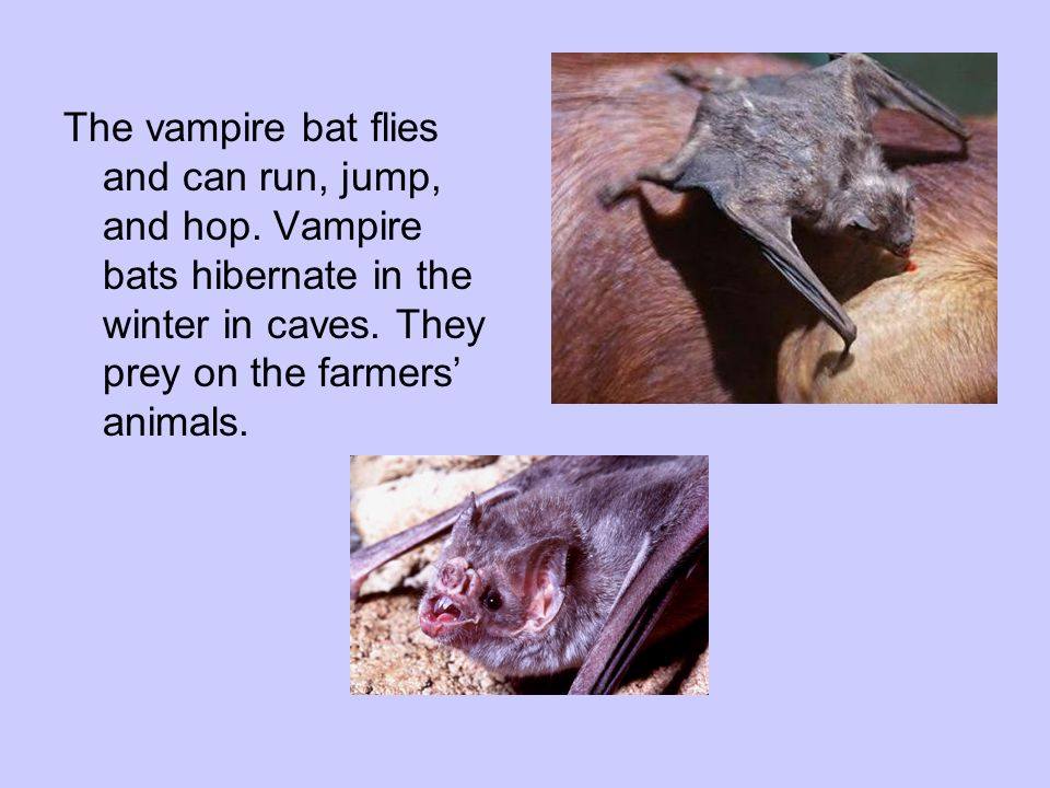 The vampire bat flies and can run, jump, and hop