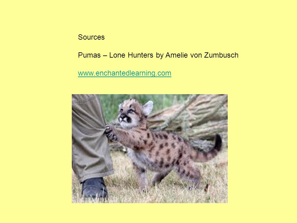 Sources Pumas – Lone Hunters by Amelie von Zumbusch www.enchantedlearning.com