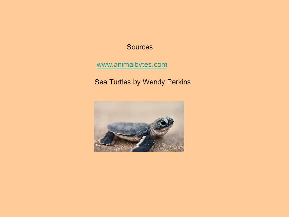 Sources www.animalbytes.com Sea Turtles by Wendy Perkins.