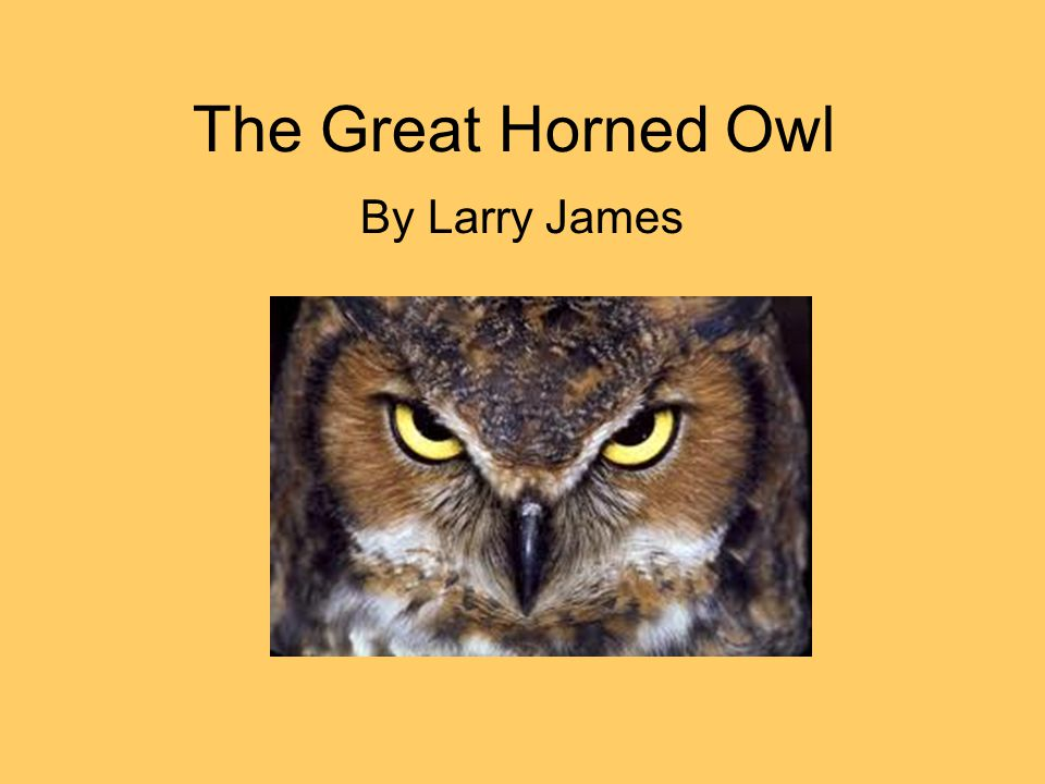 The Great Horned Owl By Larry James