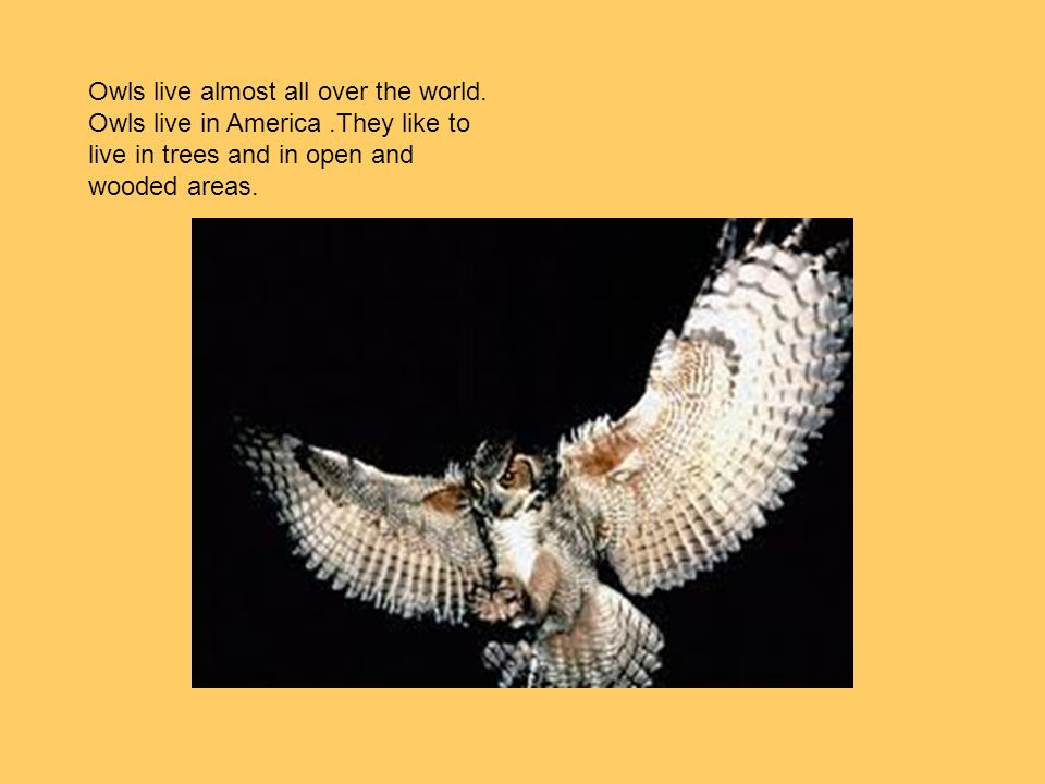 Owls live almost all over the world. Owls live in America