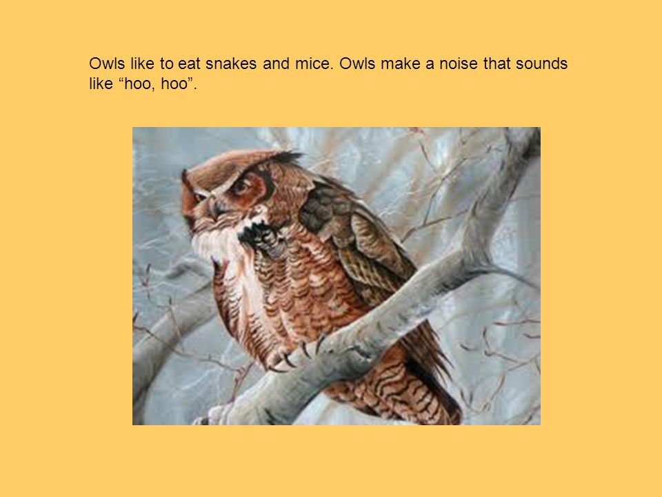 Owls like to eat snakes and mice. Owls make a noise that sounds