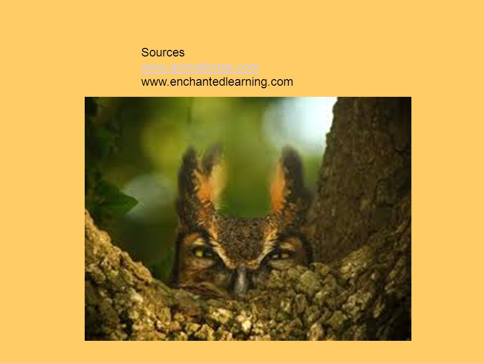 Sources www.animalbytes.com www.enchantedlearning.com