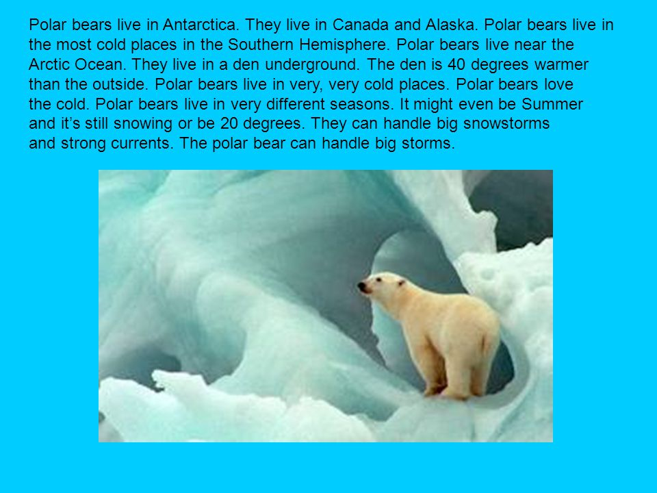 Polar bears live in Antarctica. They live in Canada and Alaska