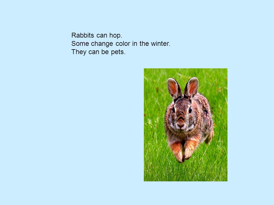 Rabbits can hop. Some change color in the winter. They can be pets.