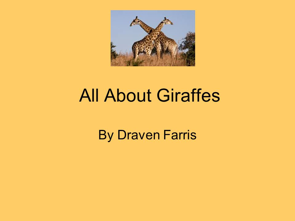 All About Giraffes By Draven Farris