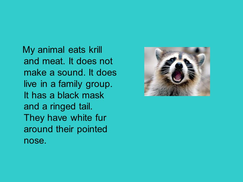 My animal eats krill and meat. It does not make a sound