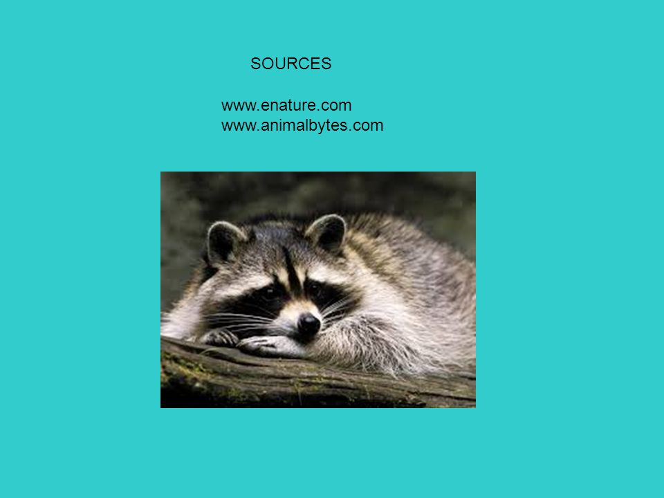 SOURCES www.enature.com www.animalbytes.com