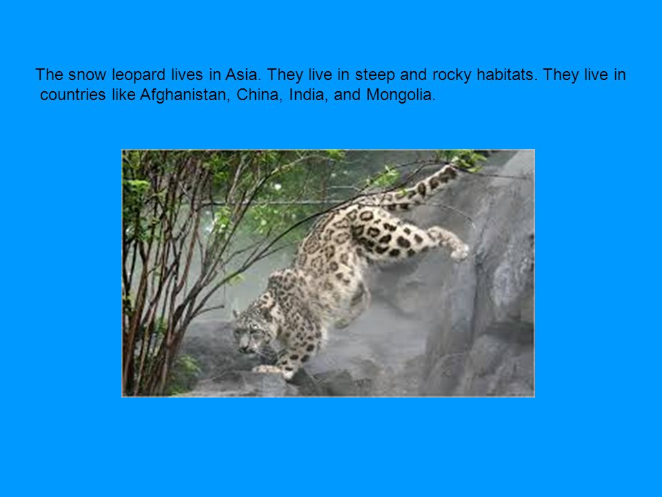 The snow leopard lives in Asia. They live in steep and rocky habitats