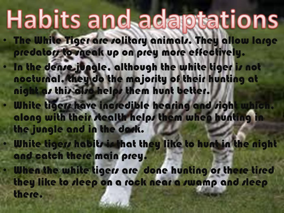 Habits and adaptations