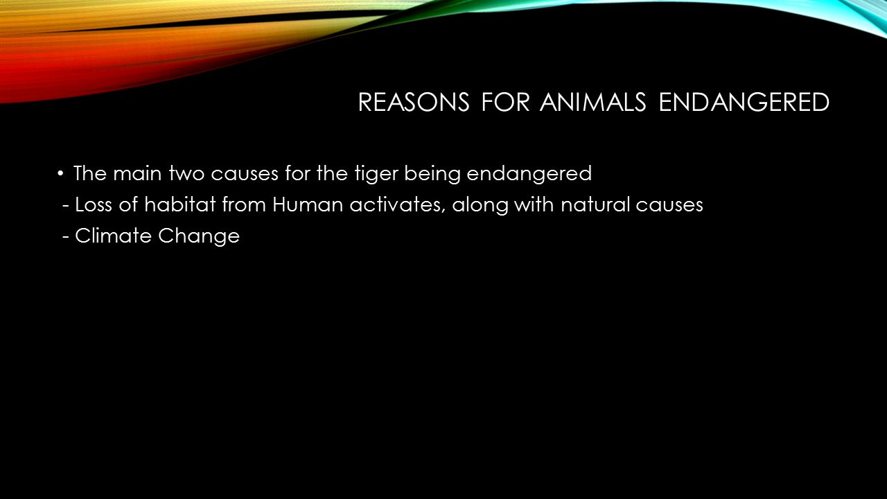Reasons for Animals endangered