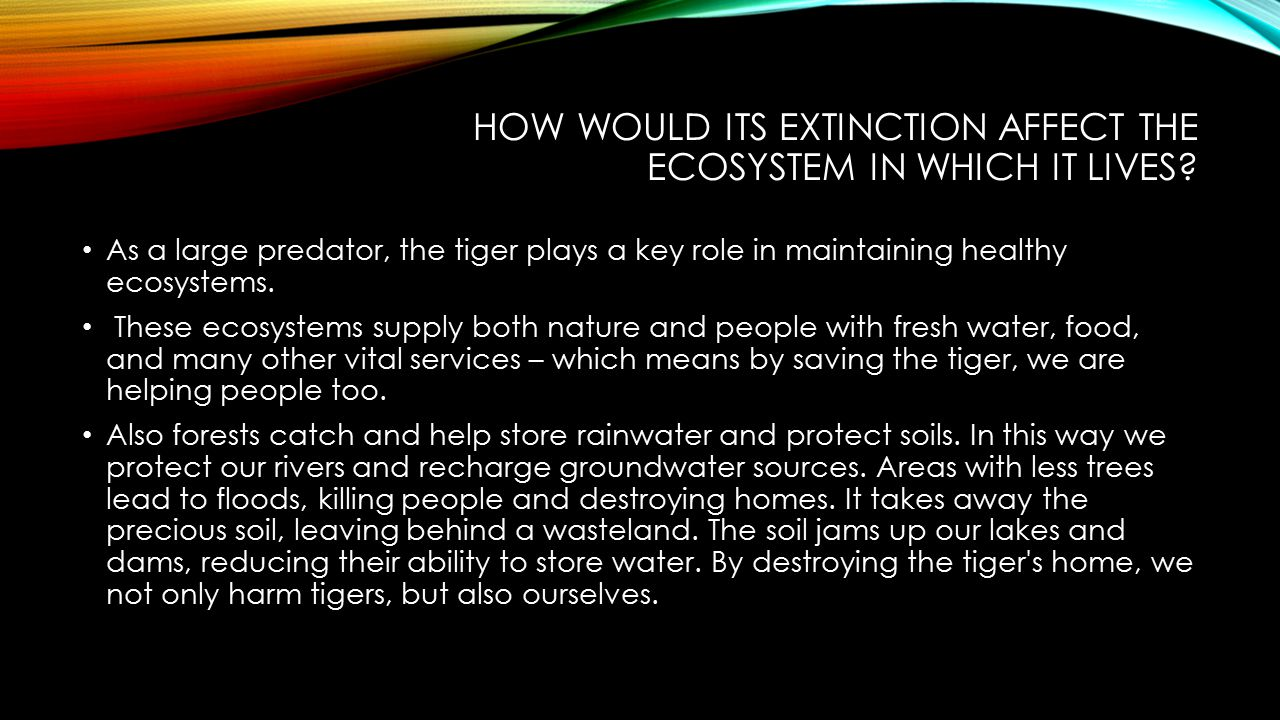 How would its extinction affect the ecosystem in which it lives
