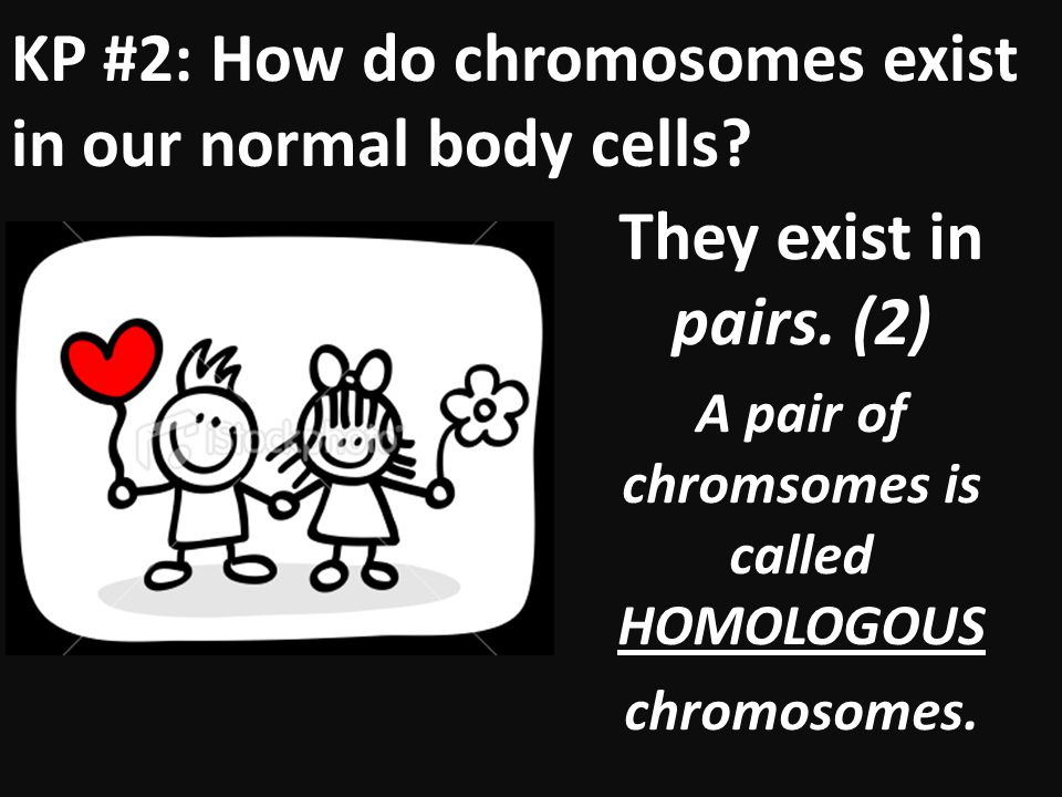 A pair of chromsomes is called HOMOLOGOUS