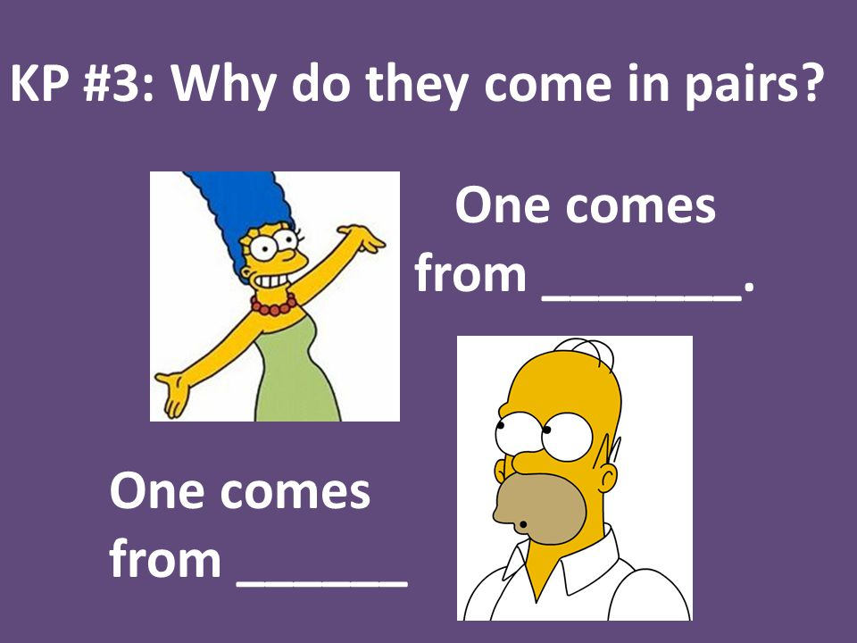 KP #3: Why do they come in pairs