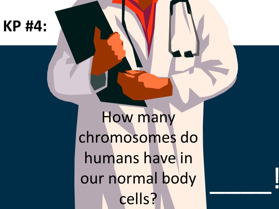 How many chromosomes do humans have in our normal body cells