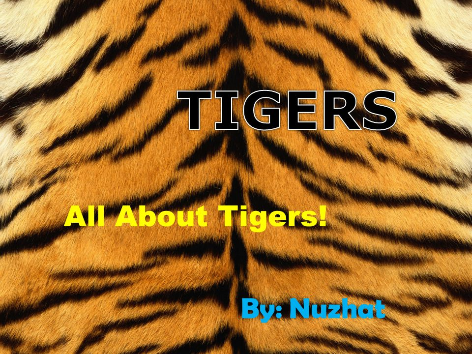 TIGERS All About Tigers! By: Nuzhat