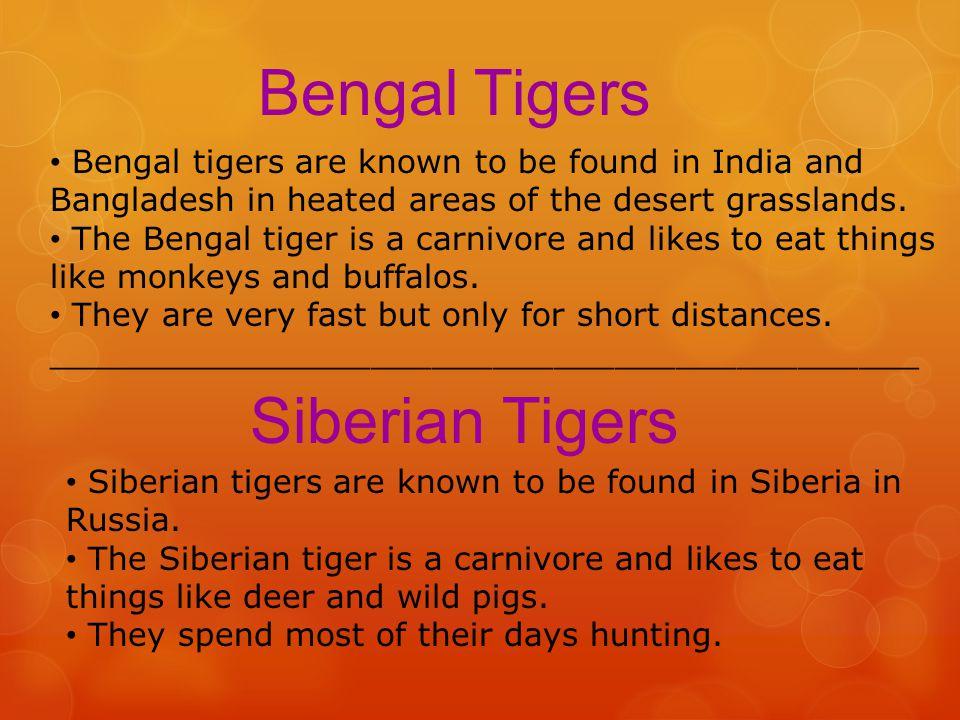 Bengal Tigers Siberian Tigers