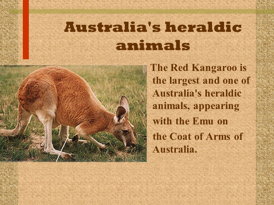 Australia s heraldic animals