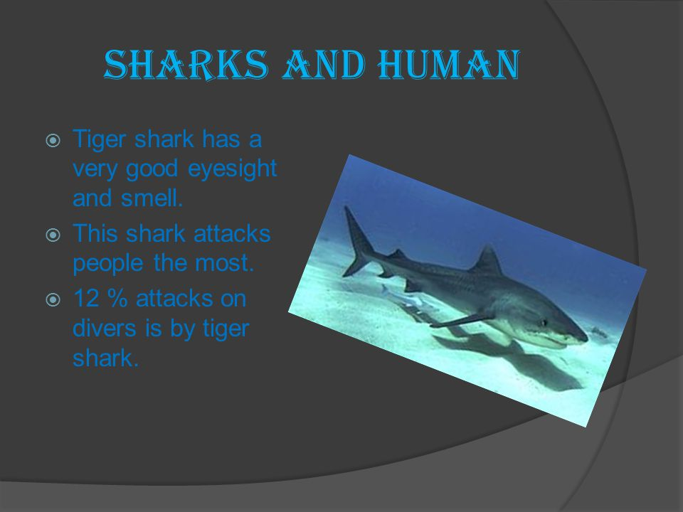 Sharks and Human Tiger shark has a very good eyesight and smell.