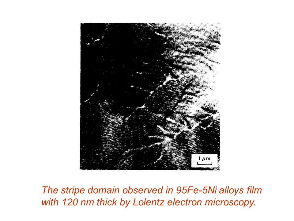 The stripe domain observed in 95Fe-5Ni alloys film