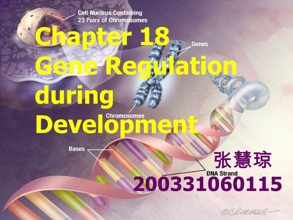 Chapter 18 Gene Regulation during Development