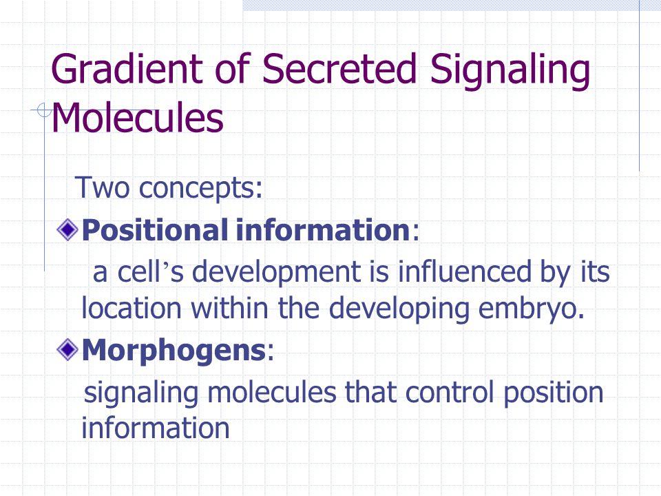 Gradient of Secreted Signaling Molecules