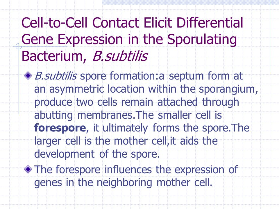 Cell-to-Cell Contact Elicit Differential Gene Expression in the Sporulating Bacterium, B.subtilis